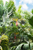 Tropical foliage - green exotic background with blue sky and white clouds. - 242545237