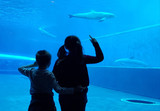 young children are watching dolphins in the aquarium