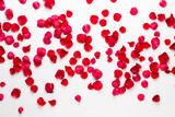 Valentine's Day. Rose flowers petals on white background. Valentines day background. Flat lay, top view, copy space. - 242553221