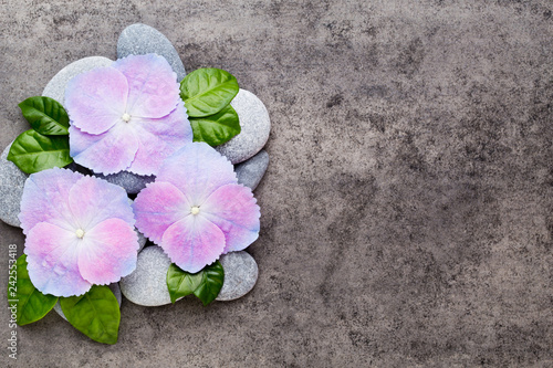 Spa flowers and massage stone, on grey background.