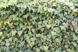 歩道の植物の風景3