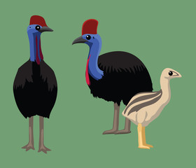 Cute Cassowary Bird Cartoon Vector Illustration
