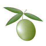 nature olive illustration