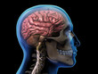 Profile of Man with X-ray Skull, Brain and Spinal Cord on Black