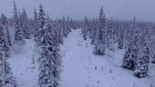 Aerial video of a snow covered forest in Finnish Lapland, above the Arctic Circle