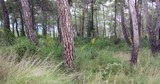 Forest landscape, pine trees in green forest nature - 242608461