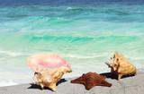 starfish and seashells - 242632826