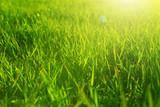 Fresh spring green grass and sun. Landscape in summer - 242637293