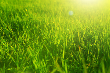 Fresh spring green grass and sun. Landscape in summer