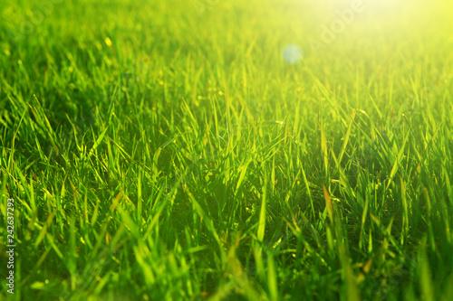 Leinwandbild Motiv Fresh spring green grass and sun. Landscape in summer