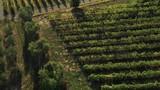 Aerial, vineyards in Montecarlo, Italy - 242643482