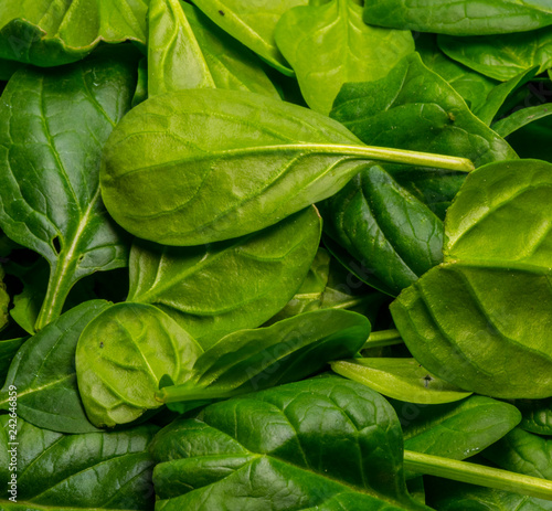 Foto Murales Baby Spinach