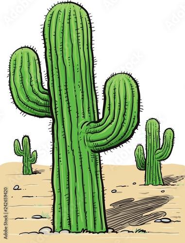 Cactus, desert plant, prickly plant