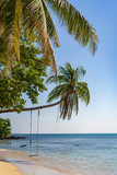 Swing on the Beach. Under the Palm Tree. Beautiful Seascape. - 242661204