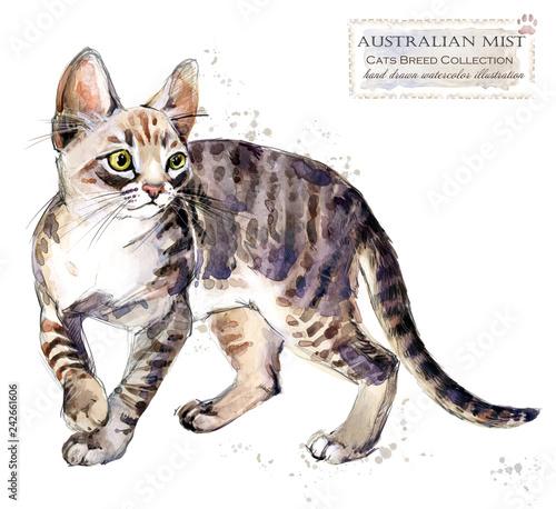 Australian mist cat. watercolor home pet illustration. Cats breeds series. domestic animal.