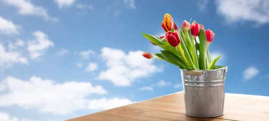 flora and gardening concept - red tulip flowers in tin bucket on wooden table over blue sky and clouds background