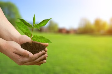 Earth eco living planet plant agriculture background