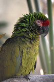 Beautiful amazon parrot with bright colored feathers