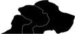 Silhouetten dreier Hunde (Dogge, Boxer, Dackel)