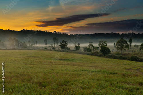 Foto Murales Beautiful morning mist hangs low over a grassland and trees with beautiful sunlight and clouds formation