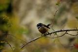 Oiseau - 242680089