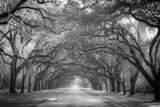 Fototapeta Sawanna - Oak Drive © Daniel L Grantham Jr