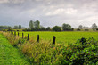 Poel Weide - a green pasture on the island of Poel in Germany