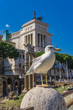 Quadro Seagull by the Vittoriano monument in Rome