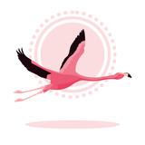 beautiful flamingo bird flying