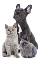 Young pets sitting isolated on white background