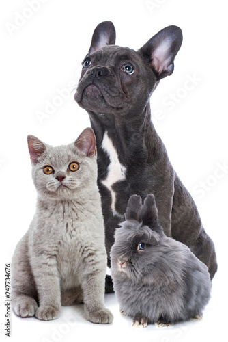 Young pets sitting isolated on white background - 242734676
