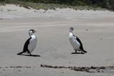 Peaceful cormorants