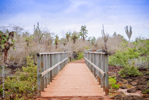 obraz lub plakat Outdoor view of wooden path on Isabela Island. Galapagos Islands