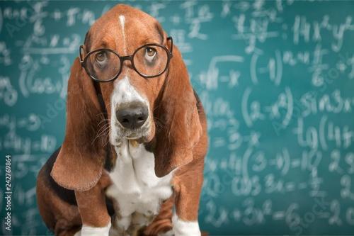 Poster Math dog crazy glasses academic animal blackboard