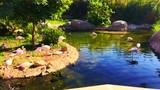 Pink flamingos shore of pond natural habitats. - 242775285