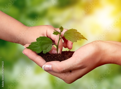 Hands of young beautiful couple holding little green plant