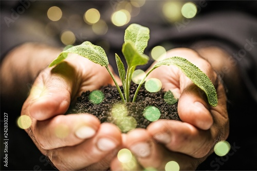 Man hands holding green plant