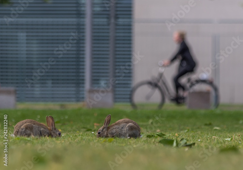 Berlin, Germany - the Tiergarten is probably the most famous park in Berlin, and notable for its wild rabbit