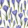 Seamless pattern with purple crocus flowers. Hand drawn vector illustration. - 242853060