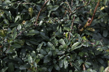 leaves bush bushes  © eahyeah
