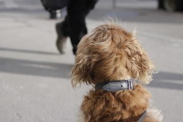 dog waiting © eahyeah