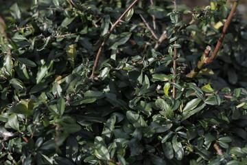 leaves plants bush bushes © eahyeah