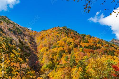 鮮やかな紅葉の山