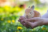 girl and rabbit - 242882856