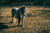 A pony in the forest - 242895843