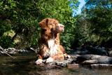 Hund auf Stein im Bach