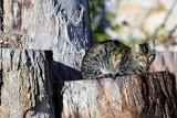 Cute Cyprus cat