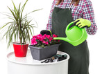 woman professional gardener or florist in apron holding flowers in a pot and gardening tools  isolated on white background. Copy space - 242917067