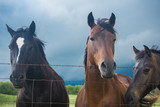 Fototapeta Konie - Horses before the Storm © Sue
