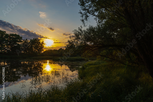 River, tree branches on sunset background